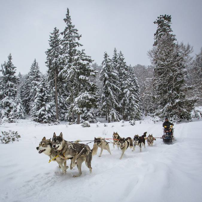 A dog sledding  | Gavarnie Valleys